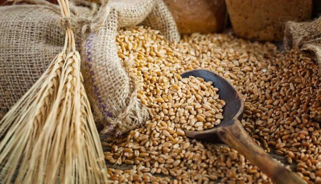 cereali-1300-100