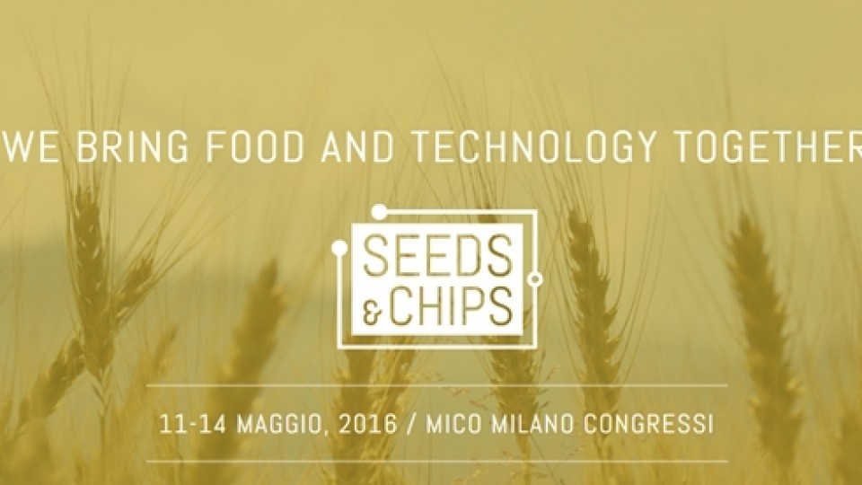 Banner Seed_chips