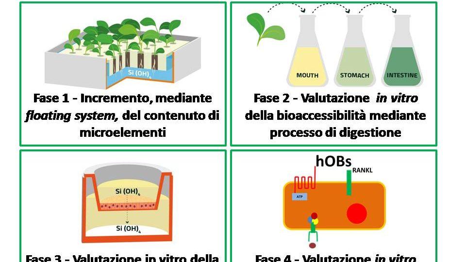 biofortificazione