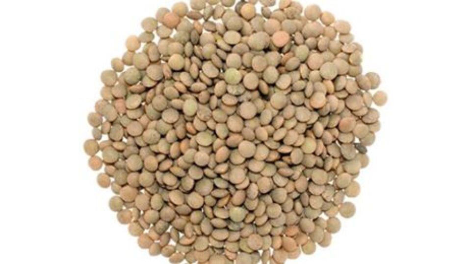 lenticchie baruzziane